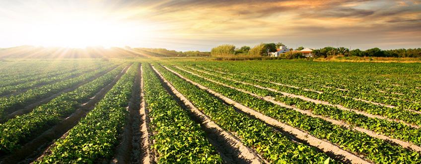 Quelques statistiques intéressantes sur le monde de l'agriculture